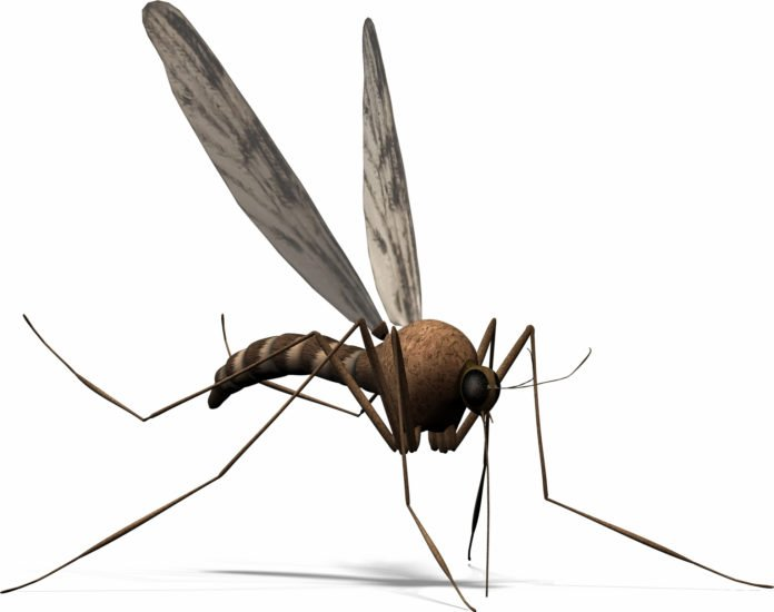 10 intresting facts about mosquitoes gives clear and fun info about innocent insects who have to suck blood to survive