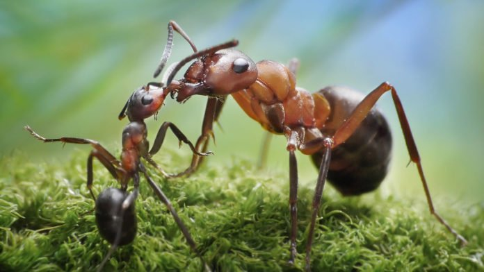 oasdom.com everything you need to know about ants 1