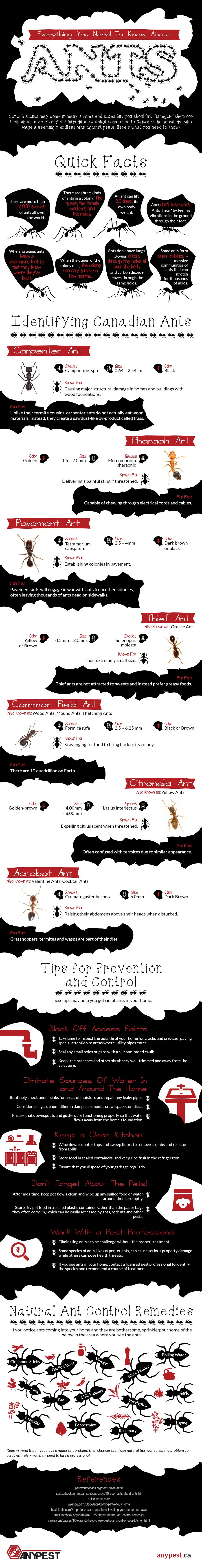 When it comes to pests, ants can be some of the most troublesome to remove from your home. In fact, a recent survey revealed that for homeowners, ants are the most irritating pests. Therefore it's important to know all the facts about ants. Check out this cool infographic