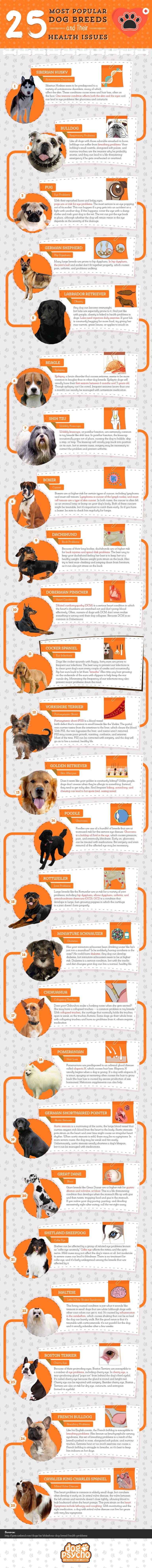Oasdom.com - dog-breeds-and-their-health-issues