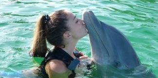Scientists have long known that dolphins can use whistles and clicks to express ideas and warnings to other dolphins, but we never knew the extent that do..