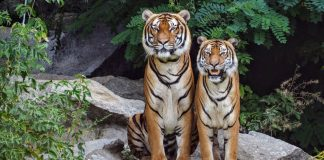 Endangered species going to extinction