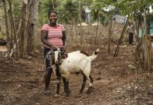 Oasdom How to Start a Goat farming business in Nigeria