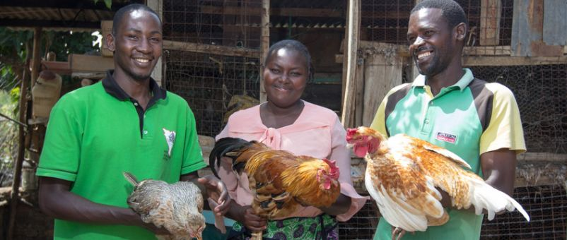 Poultry farming in Nigeria business