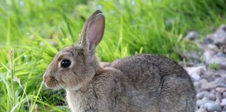 Image of rabbit feeding - how to start a rabbit farming business in Nigeria