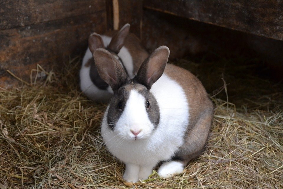 is rabbit business profitable in Nigeria