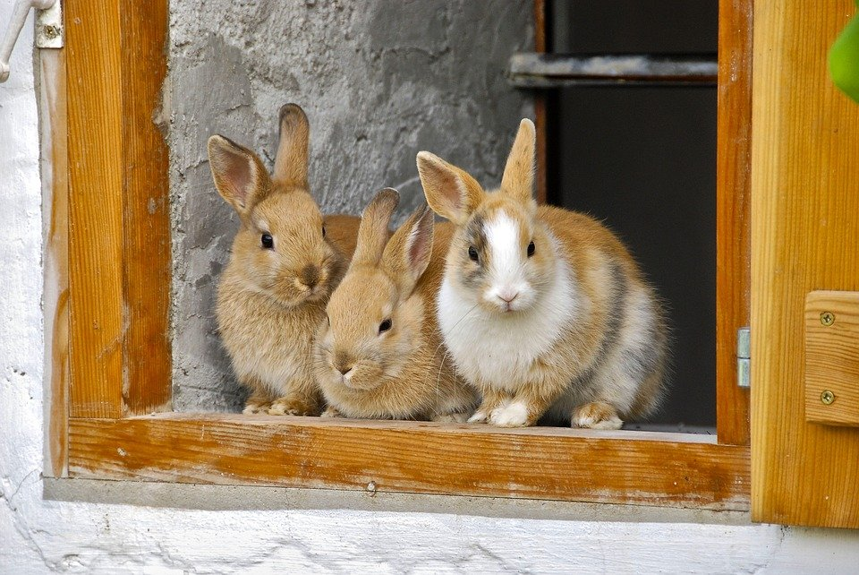 rabbit farming business