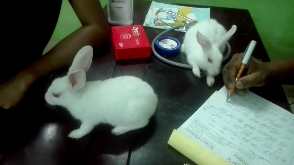 Rabbit health care