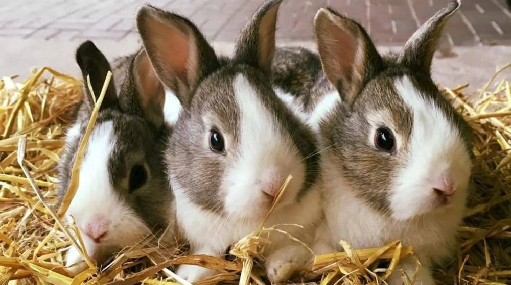 lnvestment opportunities in Nigeria - rabbit farming