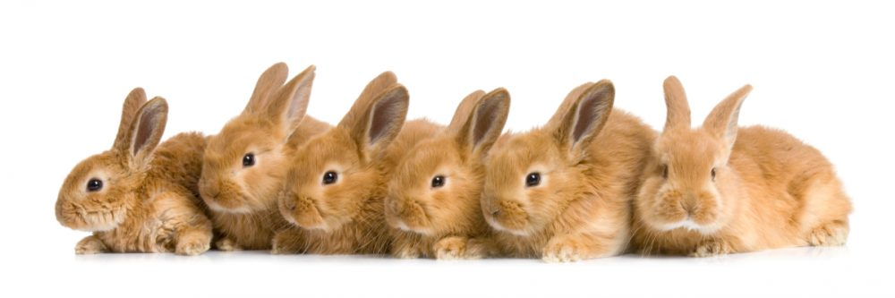 rabbit business in Nigeria