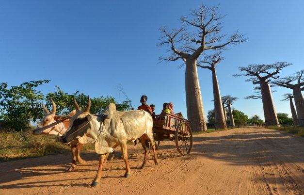 Madagasar