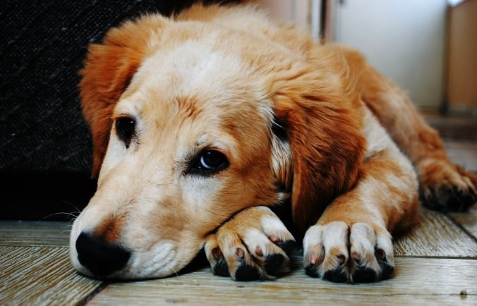 Oasdom best dog breeds for your apartment today