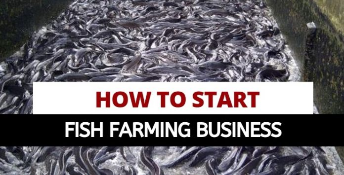 Oasdom How to start fish farming in Nigeria Catfish farming business today