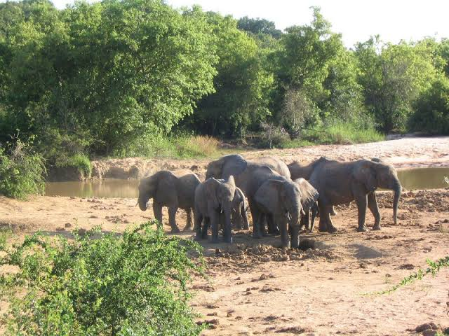 Yankari Game Reserve - Tourist center in Nigeria