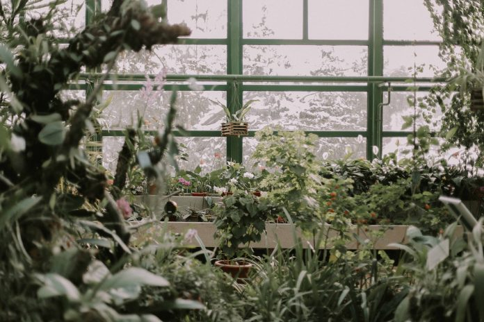 Green house care